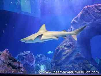 Oniria : ouverture de l'aquarium de Canet-en-Roussillon - La Semaine du Roussillon