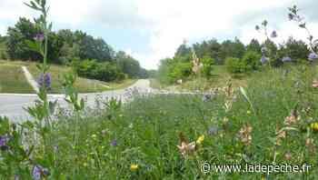 Villeneuve-sur-Lot : la nature partout, même sur la route des vacances - LaDepeche.fr