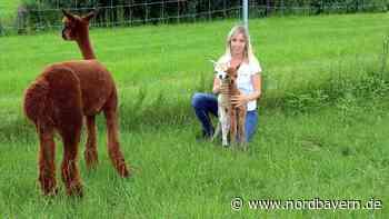 Goldige Überraschung auf dem Alpaka-Hof in Gerbersdorf - Nordbayern.de