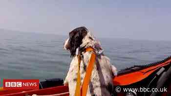 Rescuers find lost dog Ollie after swim off Porthcawl