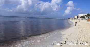 Costas de Playa del Carmen amanecieron libres de sargazo - La Verdad Noticias