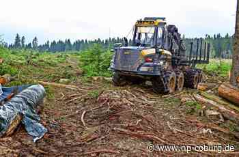 Tettau - Forstwirtschaft beklagt größte Katastrophe aller Zeiten - Neue Presse Coburg