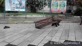 """Atto vandalico in piazza Tribunali, ignoti danneggiano una panchina e fuggono: """"Lucera non merita simili idiozie"""" - FoggiaToday"""
