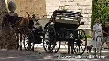 Los caballos de las galeras de Palma siguen circulando a pesar de la prohibición por altas temperaturas - mallorcadiario.com