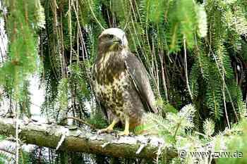 Warum gibt es so viele Wildtiere im Schorndorfer Fuchshof? - Schorndorf - Zeitungsverlag Waiblingen