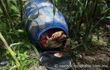 Dejan cadáver dentro de un tambo en el Estado de México - Quadratín Oaxaca