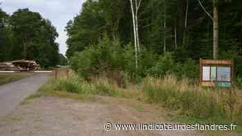 Morbecque : plus de 87 000 arbres seront plantés en forêt de Nieppe Touchée par la chalarose - L'Indicateur des Flandres