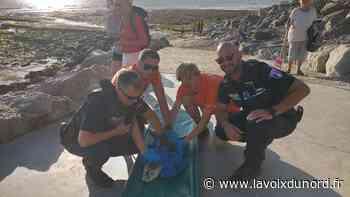 Un bébé phoque sauvé sur la plage de Wimereux - La Voix du Nord
