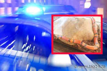Dillenburg: Exotische Schlange in Fußgängerzone sorgt für Alarm und Polizei-Einsatz - TAG24