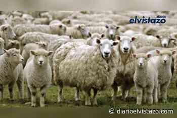 """""""Como ovejas sin pastor"""", por monseñor José Manuel Romero Barrios - Diario El Vistazo"""