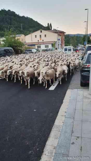"""Tres mil ovejas """"invaden"""" Vilaller en su ruta hacia la boca sur del túnel de Vielha - SEGRE.com"""