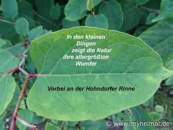 Eine kleine Nachmittagstour - Lutherstadt Wittenberg - myheimat.de