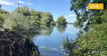 Der Goldkanal-Baggersee bei Elchesheim-Illingen leidet unter Keimen und PFC-Belastung - BNN - Badische Neueste Nachrichten