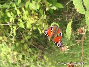 Les papillons de Normandie Maison des forêts d'Orival mercredi 11 août 2021 - Unidivers