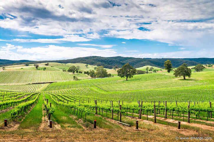 'Slip, Slop, Shiraz': American Wine Makers Urged To Adopt Australian Techniques