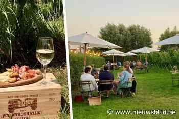 """Een zomerbar tussen de wijnranken: """"We brengen de Provence naar Zwijnaarde"""" - Het Nieuwsblad"""