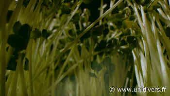 Projection de vidéos d'artistes La Graineterie - Unidivers