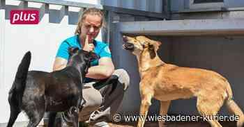Wiesbaden Wenn Hundebesitzer mit ihren Tieren überfordert sind - Wiesbadener Kurier