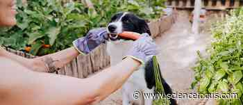 Dogs won't give you food, even if you gave them some first - BBC Science Focus Magazine