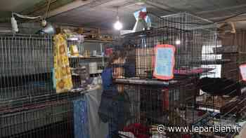 Chihuahuas, bouledogues… le pavillon d'Osny cachait un élevage illégal de 166 chiens - Le Parisien
