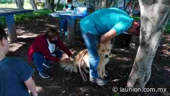 Implementa Ayuntamiento de Jiutepec campaña de vacunación antirrábica - Unión de Morelos