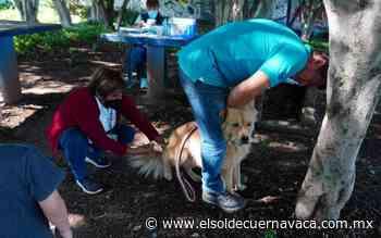 En Jiutepec: ¡Lleva a vacunar a tus peluditos! - El Sol de Cuernavaca