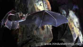 Research finds novel coronavirus, related to SARS-Cov-2 that causes Covid-19, in horseshoe bats in UK - Hindustan Times