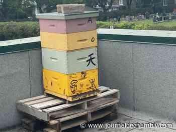 Des ruches urbaines pour aider les abeilles - Le journal de Chambly - Le Journal de Chambly