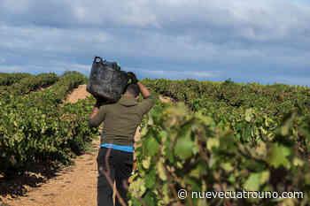 """La Rioja """"contempla"""" vacunar a los temporeros agrarios - NueveCuatroUno"""