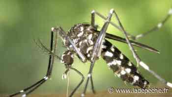 Mazamet. Aide pour piéger les moustiques - ladepeche.fr