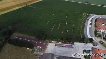 Un labyrinthe créé dans un champ de maïs à Comines-Warneton - Notélé