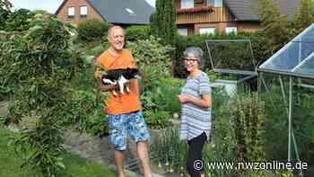 Nordenhamer Ehepaar Petershagen setzt auf Eigenanbau: Obst, Kräuter und Gemüse auf 500 Quadratmetern - Nordwest-Zeitung