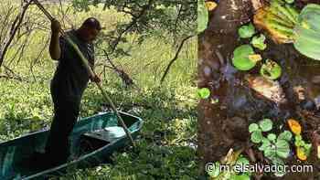 Encuentran decenas de peces muertos en laguna de Conchagua | Noticias de El Salvador - elsalvador.com