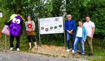 Weingarten | Mit dem Träuble durch die Weinberge - Landfunker