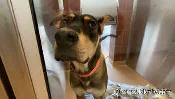 Capital Humane Society asking for help with over 300 animals in the shelter - KLKN