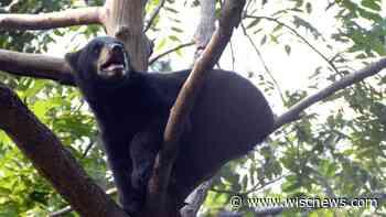 Ochsner zoo welcomes new bear cub, ambassador animals - Baraboo News Republic