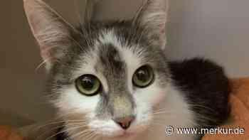 Feuerwehr rettet Katze aus tosender Kanker in Garmisch-Partenkirchen - Merkur Online