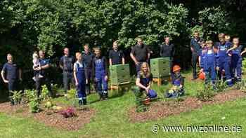 Naturschutz in Westerstede: 50.000 Bienen für die Jugendfeuerwehr - Nordwest-Zeitung