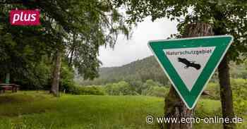 Michelstadt will Ökologie von der Natur in die Stadt holen - Echo Online