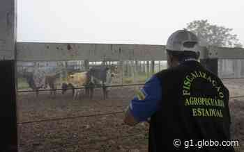 Flagrante de irregularidades é registrado em feira de animais de Tobias Barreto - G1
