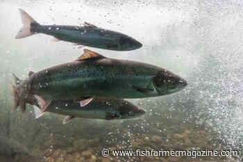 ISA cases continue to mount – Fish Farmer Magazine - Fish Farmer Magazine