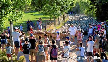 SEVERAC: Visite de ferme et soirée berger à Soussuéjouls - Journal de Millau