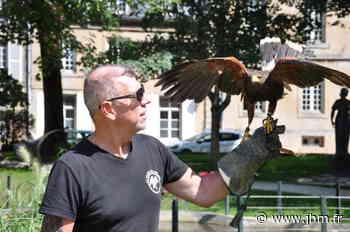 Langres fait appel aux services d'un fauconnier pour effaroucher les pigeons - le Journal de la Haute-Marne
