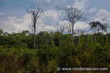 MEIO AMBIENTE: Lei estadual que trata de compensação de reserva legal é inconstitucional - Rondoniaovivo