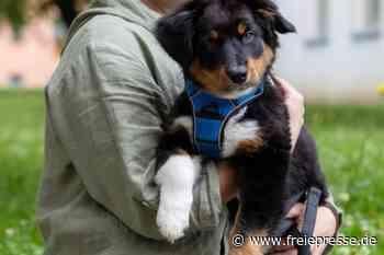 Hebamme mit Hund - Freie Presse