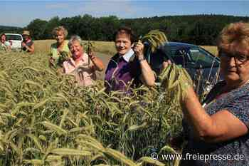 Irfersgrüner Landfrauen ernten Getreide für den Erntekronenwettbewerb - Freie Presse
