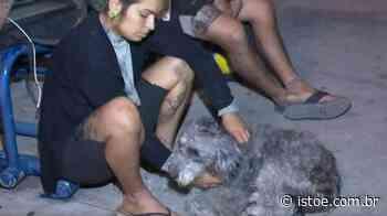 Policial civil mata cachorra no Rio de Janeiro - Istoe