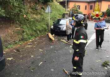 Uomo di Cossato muore colpito da un albero - La Provincia di Biella