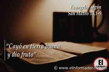 Cayó en tierra buena y dio fruto Evangelio según San Mateo 13,1-9. - El Informador - Santa Marta
