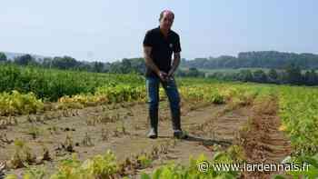 Les maraîchers de Sedan ont été diversement impactés par la crue et les fortes pluies - L'Ardennais